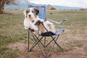 Hund i festivalstol